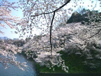 20090407_kokyo1