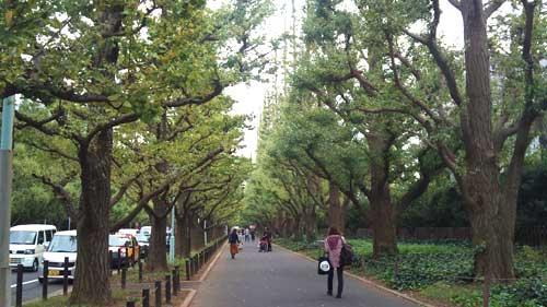 20111109_ichou